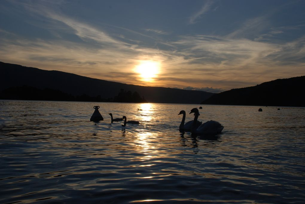 lac coucher du soleil cygne